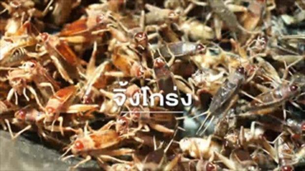 กบนอกกะลา : ฟาร์มแมลง แหล่งอาหารในอนาคฅ Full (1 ก.พ.61)