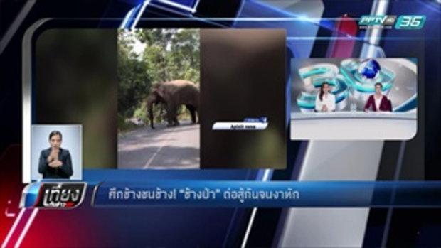 """ศึกช้างชนช้าง! """"ช้างป่า"""" ต่อสู้กันจนงาหัก - เที่ยงทันข่าว"""