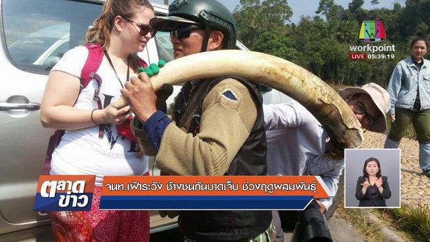 จนท. เฝ้าระวัง ช้างชนกันบาดเจ็บ ช่วงฤดูผสมพันธุ์ l ข่าวเวิร์คพอยท์ l 9 ก.พ. 61