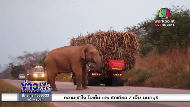 """เผยคลิปช้างป่า """"พี่ด้วน"""" ยืนขวางถนนปล้นรถอ้อย l ข่าวเวิร์คพอยท์ l 13 ก.พ. 61"""