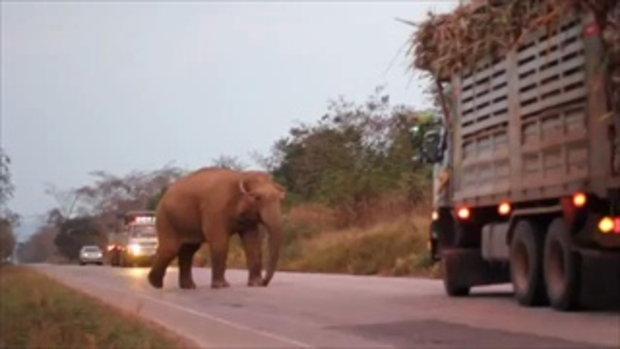 หมอล็อต เผยคลิปช้างป่า วางแผนปิดถนนปล้นรถอ้อย เบื้องหลังวิธีแก้ปัญหา