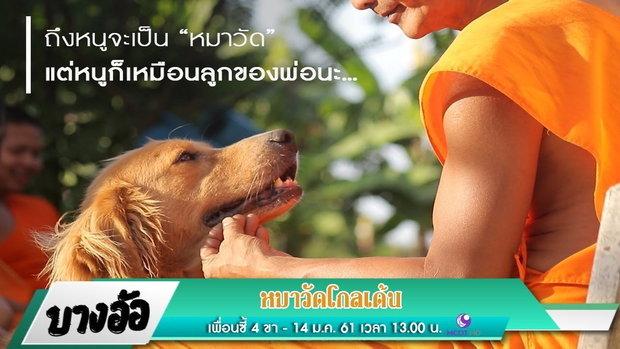 หมาวัดโกลเด้น II เพื่อนซี้ 4 ขา : บางอ้อ (14 ม.ค. 2561) 3/4