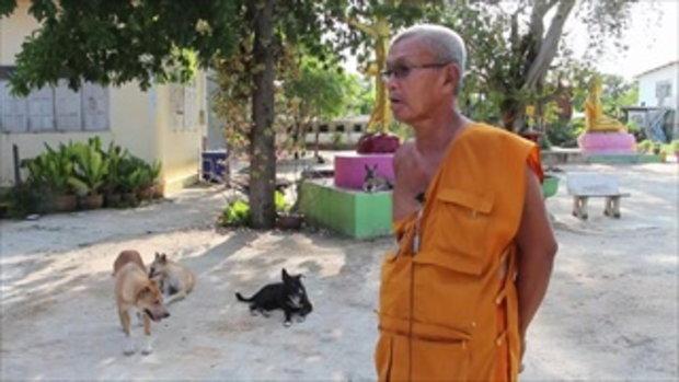 หวั่นหมาแมวล้นวัด เจ้าอาวาสวัดดังอ่างทอง ขึ้นป้ายตำหนิคนปล่อยหมาแมว