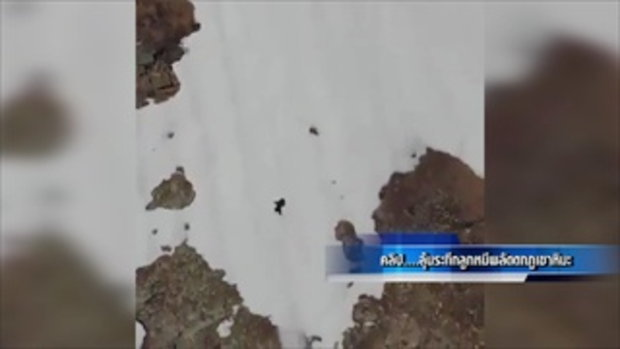 ลุ้นระทึก! ลูกหมีพลัดตกภูเขาหิมะก่อนปีนขึ้นมาหาแม่หมีได้สำเร็จ