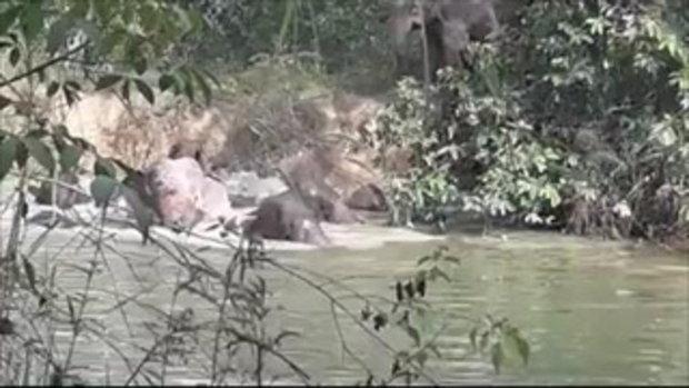 ภาพหาดูยาก! โขลงช้างป่ากว่า 10 ตัว ลงเล่นน้ำ อำเภอแก่งหางแมว จังหวัดจันทบุรี