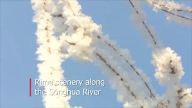 """สวยดั่งแดนเทพนิยาย """"ป่าคริสตัล"""" ริมทะเลสาบซงฮวาของเมืองมังกร"""