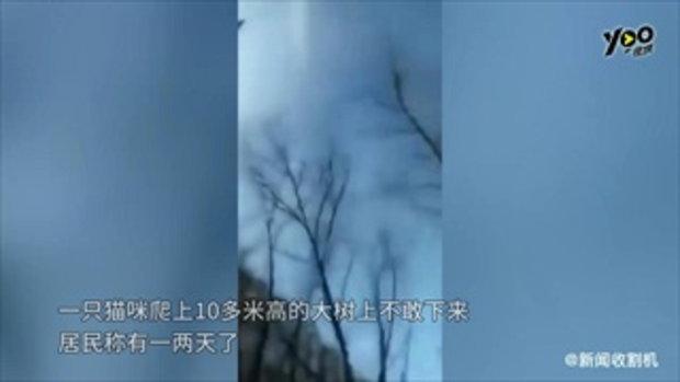 หญิงจีนใจดี จ้างรถเครนราคาเป็นพัน ช่วยแมวติดบนต้นไม้สูง 10 เมตร