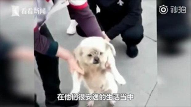 เจ้าหมาน้อยเดินทางกลับมาเจอหน้าเจ้าของ หลังพลัดพรากนาน 8 ปี