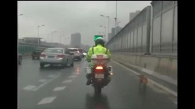 อบอุ่นหัวใจ ตำรวจจีนใจดีพาน้องหมาจรจัดเดินหลง ลงจากทางด่วน