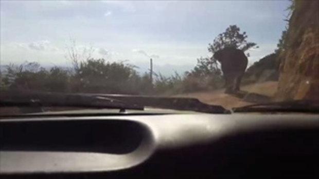 ปลัดอำเภอโดนช้างป่าไล่ตาม ระหว่างขึ้นไปแจกบัตรคนจนบนดอย