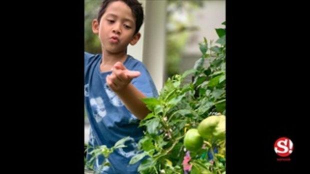 ป๋อ ณัฐวุฒิ เปิดภาพแปลงผัก ฝีมือการดูแลโดย น้องภูดิศ ออกผลได้กินแล้ว