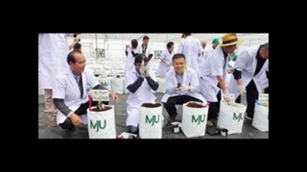 ประโยชน์แก่ผู้ป่วย! บัวขาว ร่วมปลูกกัญชาเพื่อการแพทย์ 12,000 ต้น
