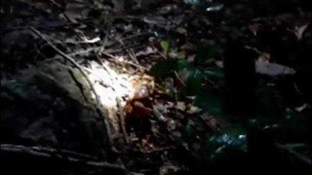 พบปูไก่สัตว์หายากที่เกาะห้อง