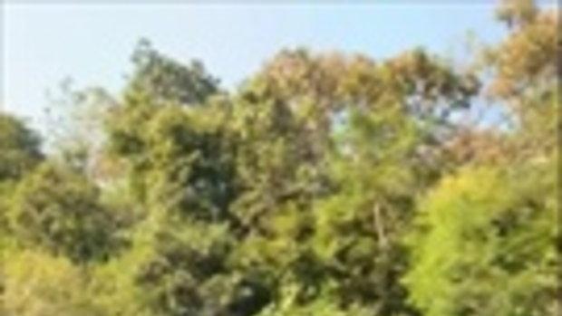 ชาวเน็ตโพสต์คลิป รถบรรทุกไม้ขึ้นม่อนแจ่ม สุดหวาดเสียว หวั่นเกิดอันตราย