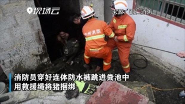 สุดชุลมุน นักดับเพลิงจีนกระโดดลงบ่อเกรอะ ช่วยชีวิตเจ้าหมูตัวกลม