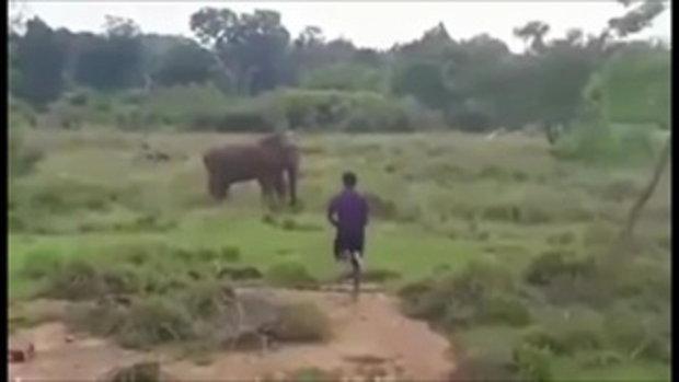 หนุ่มคึกคะนองแหย่ช้างป่า สุดท้ายเจอเหยียบดับ