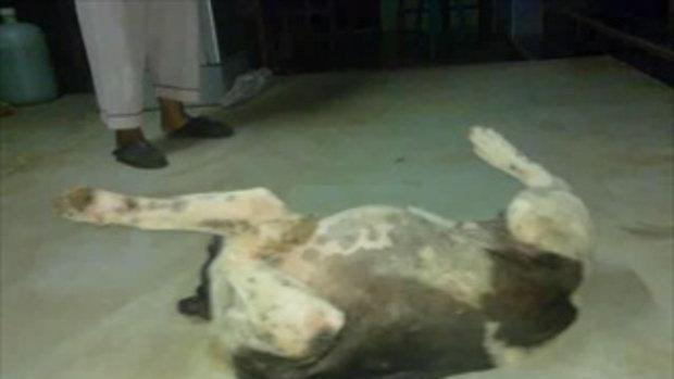 สุนัขขาวดำนอนสบาย555ฮิฮิฮิ
