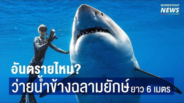 คุณกล้าไหม? ว่ายน้ำเคียงฉลามยักษ์ ยาว 6 เมตร