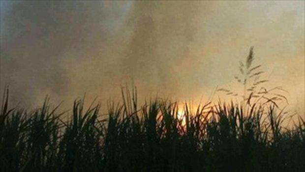 ชาวนา-ไร่อ้อยไม่สนมลพิษวางเพลิงเผาไร่เตรียมปลูกผลผลิตใหม่ต่อเนื่อง