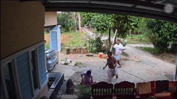 วงจรปิดจับภาพนาทีลิงหลุดวิ่งกัดเด็ก