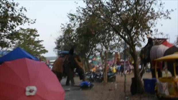 สาววัย 19 ปี ถูกช้างคลั่งพุ่งชน ไหวพริบดีกอดงาแน่นไม่ปล่อย