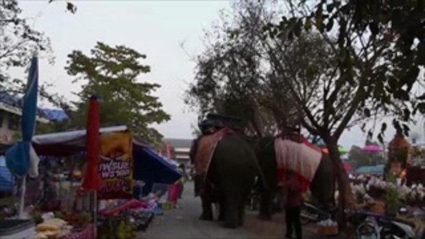 สาววัย 19 เล่านาทีเฉียดตาย ยืนถ่ายรูปอยู่ดีๆ ช้างเอางวงรัด เชื่ออาจแค่หยอกเล่น
