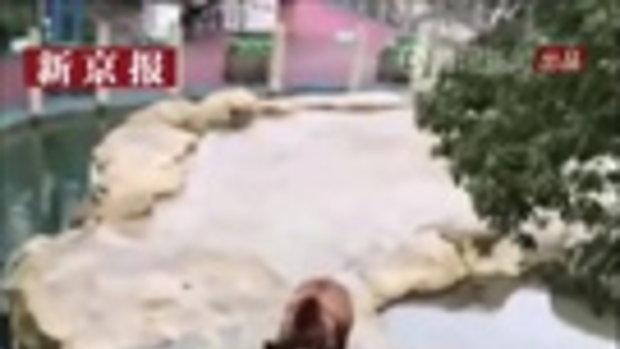 """ชาวเน็ตจีนสุดฮา นักท่องเที่ยวเผลอโยน """"ไอโฟน"""" เป็นอาหารให้เจ้าหมี"""