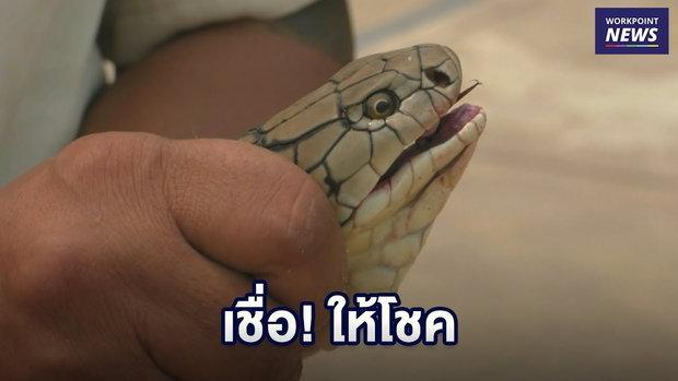งูจงอางเลื้อยขึ้นเก๋ง ครูสาวเชื่อมาให้โชค   l ข่าวเวิร์คพอยท์ l 16 มี.ค.62