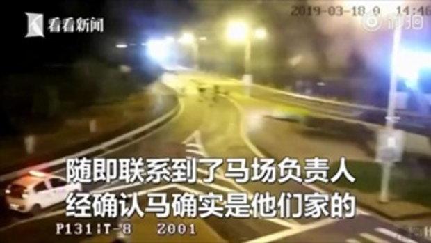 ยังดูเท่! ฝูงม้าแข่งพันธุ์ดี 9 ตัววิ่งหนีจากฟาร์ม วิ่งเล่นบนถนนกลางเซี่ยงไฮ้