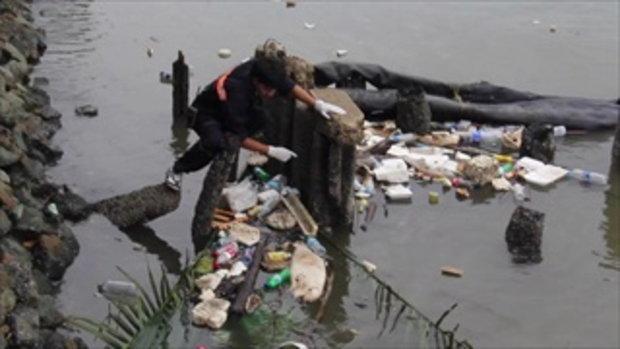 คลิป พบซากโลมาหัวบากในแม่น้ำเจ้าพระยา