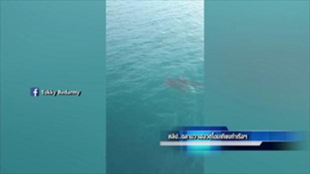 ฉลามวาฬอวดโฉมเทียบท่าเรือบรรทุกสินค้าฝั่งแสมสาร