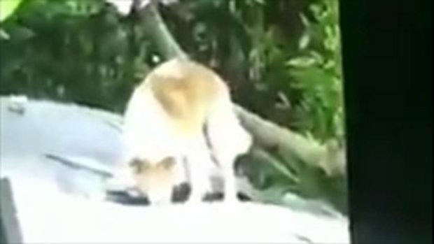สุดเซ็ง! สาวแชร์คลิปสุนัขเพื่อนบ้านกัดเก๋งพัง แต่คนเลี้ยงไม่รับผิดชอบ ลั่นให้ไปฟ้องเอง