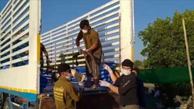 ชาวบ้านนิมนต์พระสวดบังสุกุลซากวาฬบรูด้า สัตว์แพทย์เผย กรามบนหัก-ถูกกระแทกแรง
