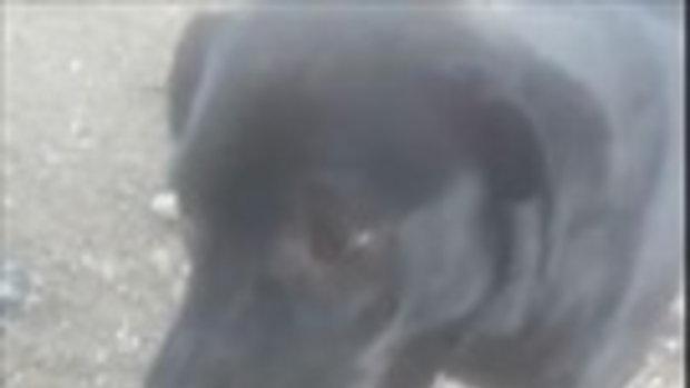 #เอาขนมให้น้องหมา  ก้าบดีๆจะไปก้าบใส่มือ เขี้ยวไอ่ตัวดำนี่มันคม