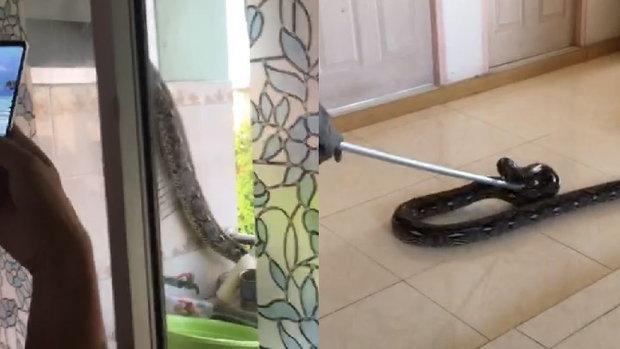คลิปหนุ่มช็อก!!งูตัวมหึมาโผล่ในห้องน้ำหอพัก