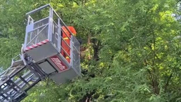 """""""ป้า""""วัย67ปีนต้นไม้ทำเนียบจี้ช่วยที่ดินขู่ผูกคอตาย"""