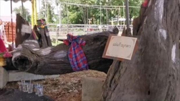 เจ้าอาวาสฝันหญิงสาวให้งมของมีค่าในสระน้ำใต้โบสถ์ พบจริงพระนาคปรกกับต้นตะเคียน