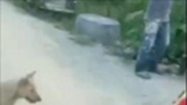 สะพรึง ผัวตัดหัวงูสิง จู่ๆ เมียเลื้อยบนถนนคล้ายงู-ร้องกรี๊ดภาษาแปลก