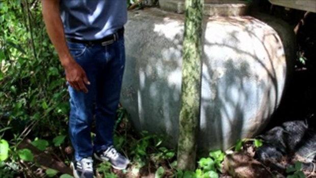 ตะลึง!พบต้นบุกยักษ์สูง2เมตรที่โคราช