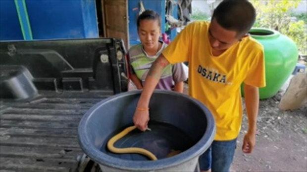 ลุงออกหาปลาในบึงพบปลาไหลสีทอง มีความเชื่องไม่ตื่นคน เลขโพล่ข้างตัว