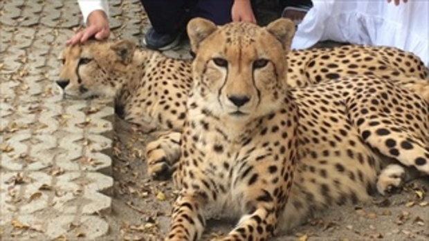 คุ้มเสือแจงดราม่า