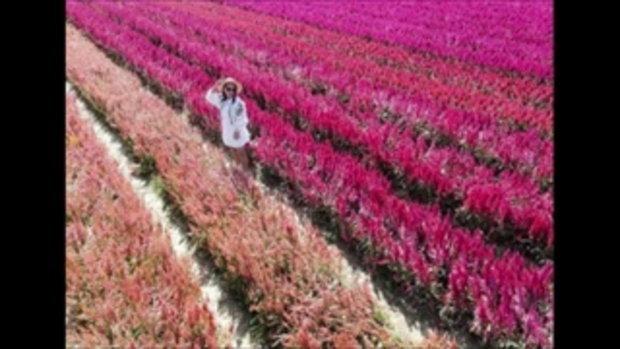 ลาล่า อาร์สยาม แชร์ประสบการณ์ จ้างโดรนถ่ายรูปทุ่งดอกไม้ เสียใจกับสิ่งที่ได้มาก