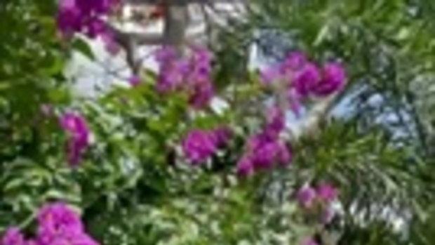 สวรรค์บนดิน ส่องสวนดอกไม้ บ้าน