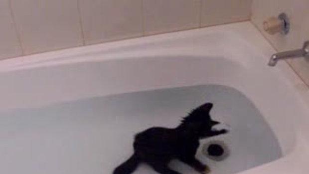 เคยเห็นมั้ย แมวชอบเล่นน้ำ
