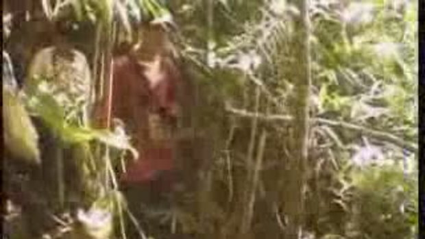 สารคดี หายนะแห่งผืนป่าตะวันตก 3