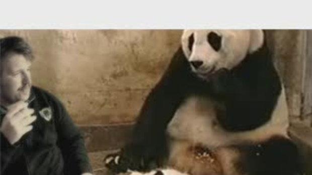 Panda ตกใจเวอร์ชั่นใหม่