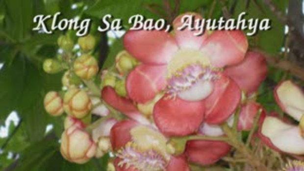 Klong Sa Bao Floating Market,Ayudhya