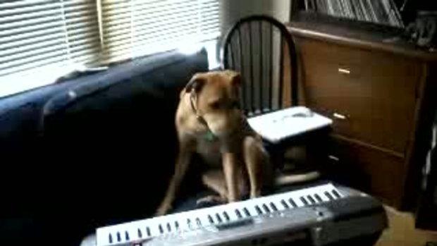 สุนัขเล่นดนตรี