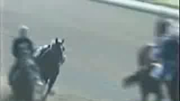 ม้าวิ่งชนม้า ท่าจะอาการหนัก