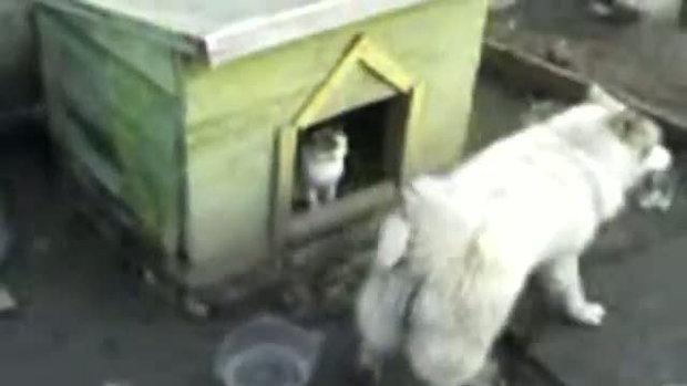 แมวกับหมา บ้านของข้าใครอย่าแตะ